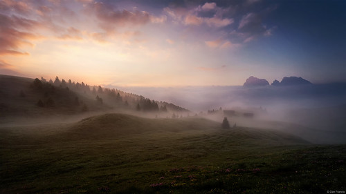 bullaccia alpedisiusi seiseralm compaccio dolomites dolomiti italy dawn morning sunrise mist fog flower grass hill mountain sassolungo sassopiatto cloud daybreak peak light travel landscape nature trees sony a7r
