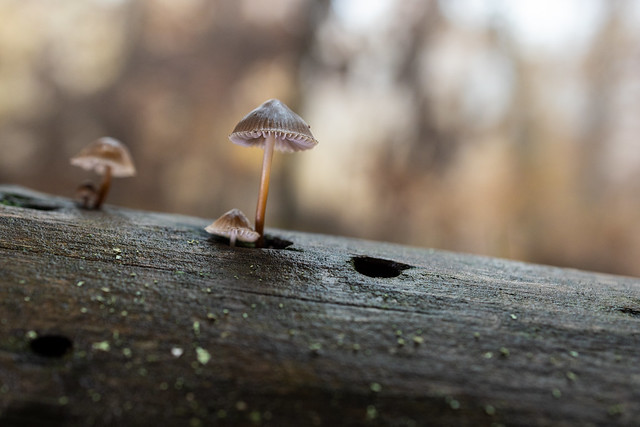 Small mushrooms  291119-1746
