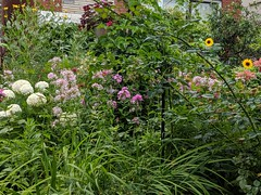 A front garden in the city