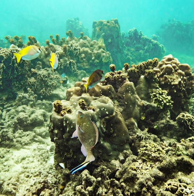 Fondos de coral