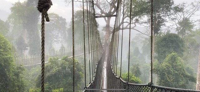 Rain and rising mist in the rainforest!