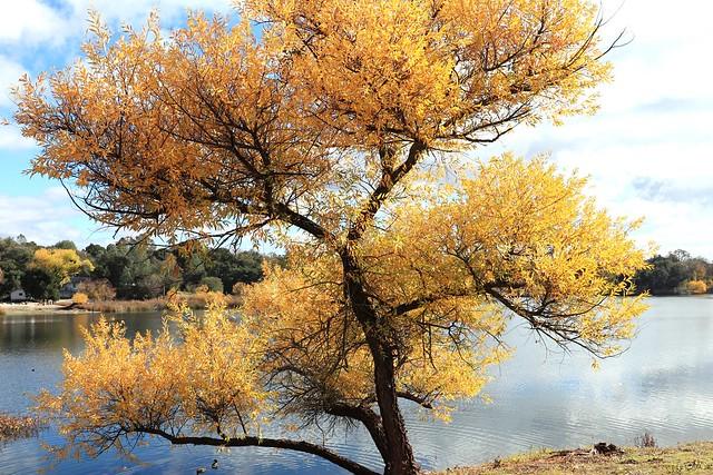 Tree and the lake