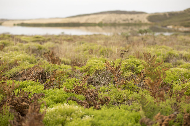 Ferns along the lagoon
