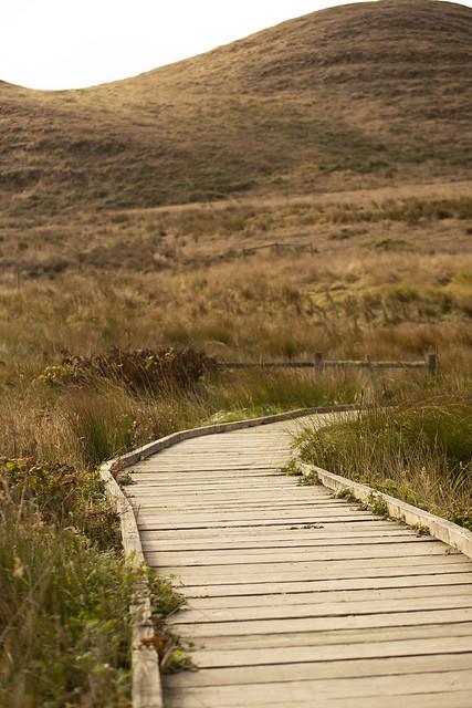 Boardwalk in Abbotts Lagoon