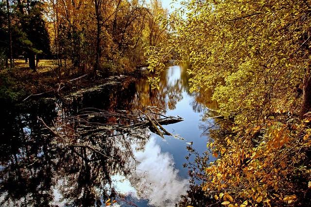 Still autumn water