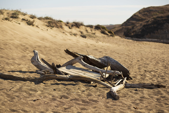 Driftwood in the sand