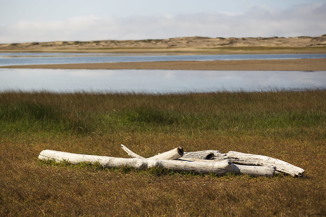 Bleached Driftwood at Abbotts Lagoon