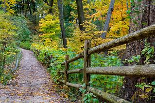 Autumn in Glen Stewart Park - Toronto