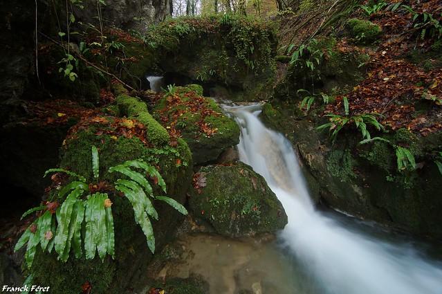 Ruisseau des Cassards - Norvaux