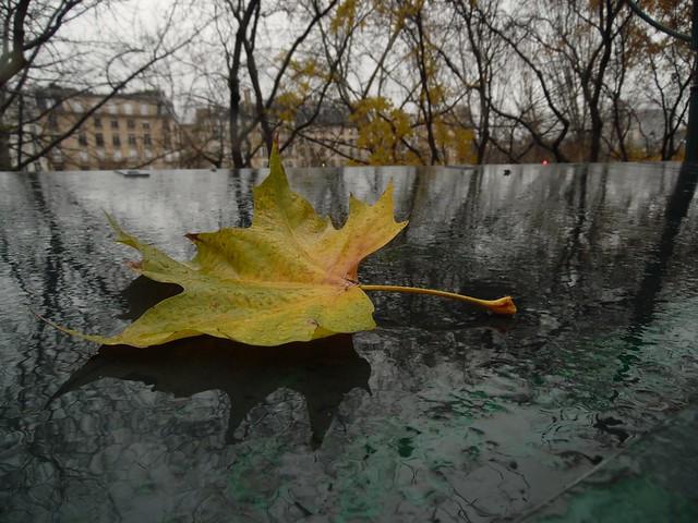 La dernière feuille..the last leaf