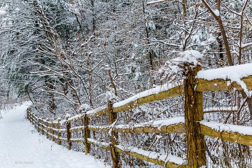 Winter in Glen Stewart Park - Toronto