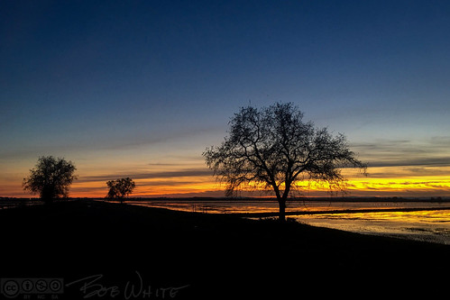 california norcal yubacounty rice flooded tree sunset