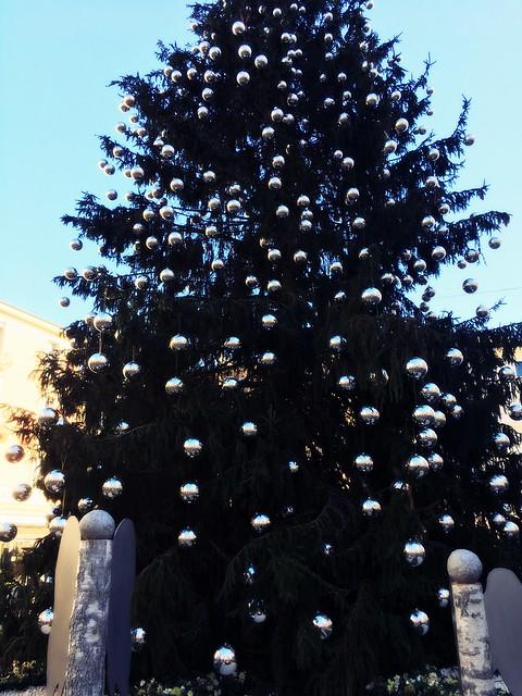 l'albero di piazza riforma