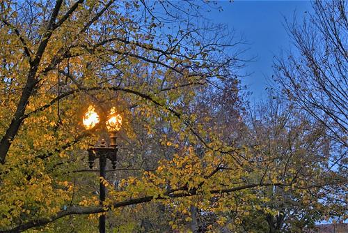 Fall color in Winter