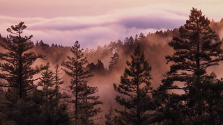 Violet sky with orange mists in the trees on Mt Tam. | by albategnius