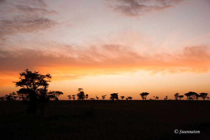 Serengeti, Tansania (30)