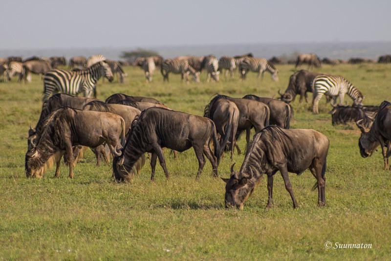Serengeti, Tansania (24)