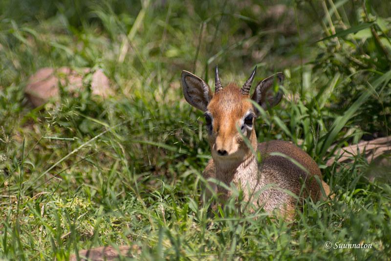 Serengeti, Tansania (13)