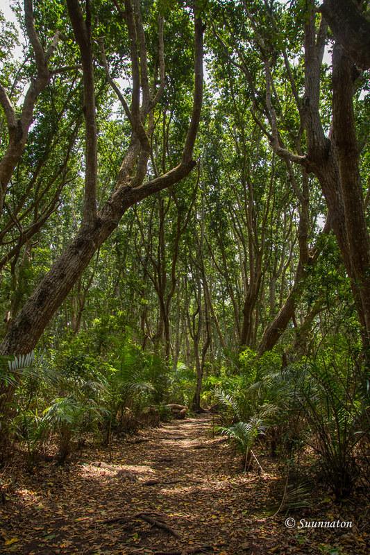 Sansibar, Jozani Forest