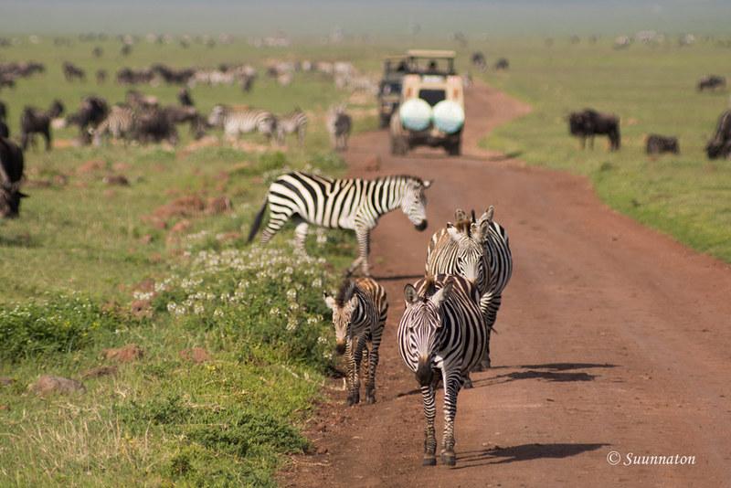 Ngorongoro, Tansania (6)