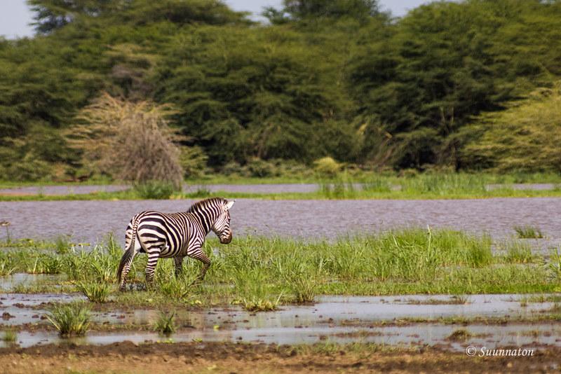 Lake Manyara, Tansania (13)