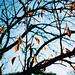 drop its leaves
