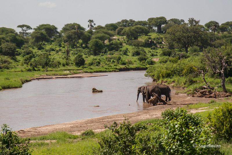 Tarangire, Tansania (7)