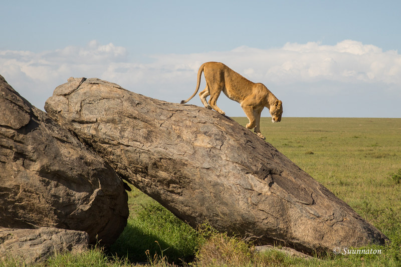 Serengeti, Tansania (1)