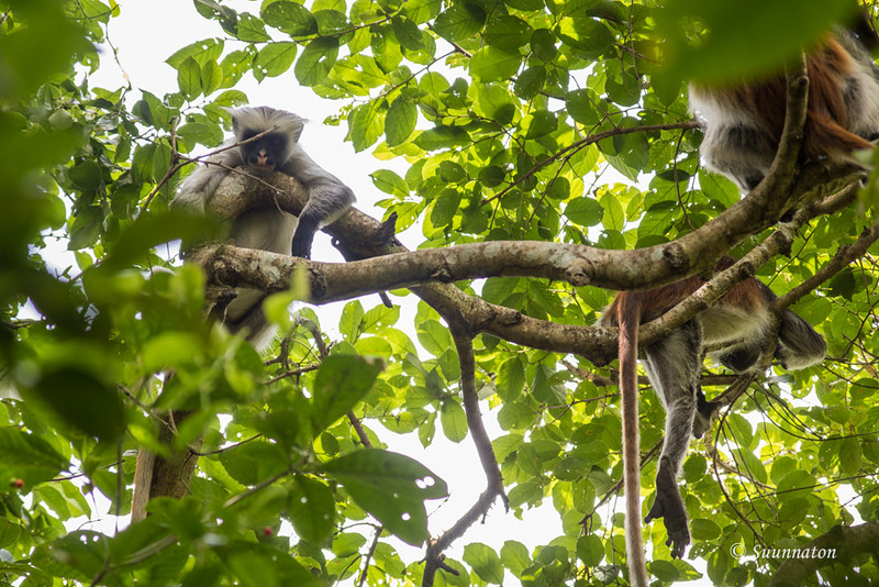 Sansibar, Tansania (16)