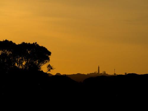 rottnestisland perth westernaustralia wa australia landscape outdoor sky sunset yellow sun twilight dusk evening silhouette longlenslandscape travel simple nature colour color olympusem10 olympusomd olympus lumix microfourthirds island tree
