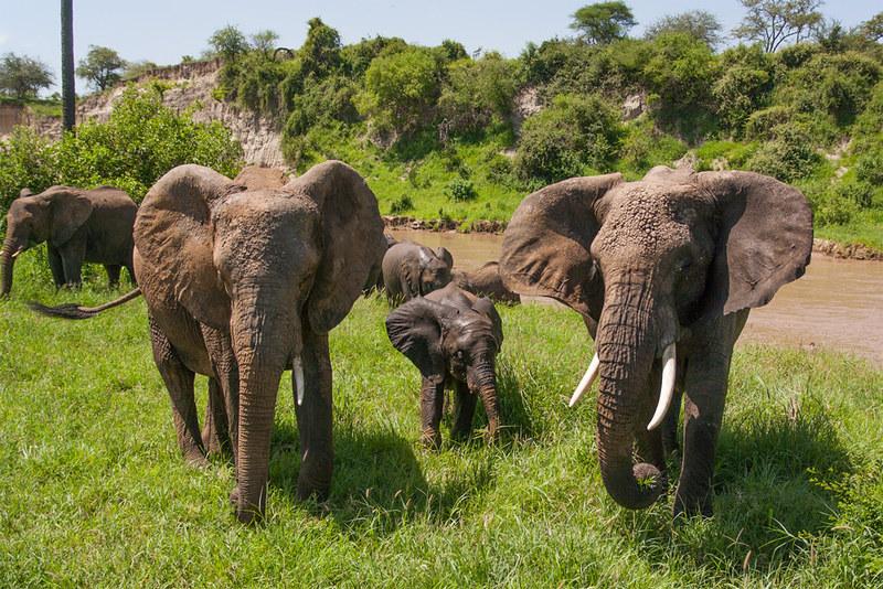 Tarangire, Tansania (10)