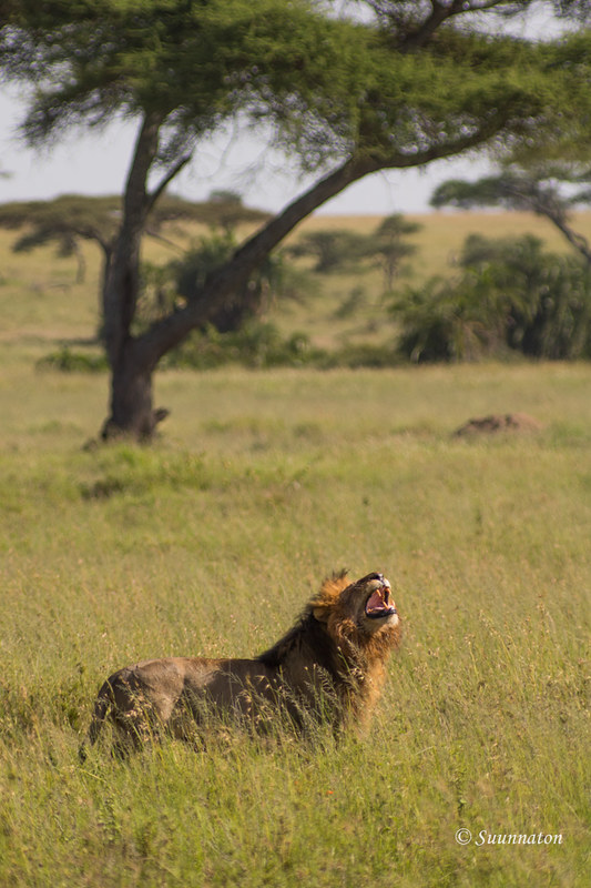 Serengeti, Tansania (8)