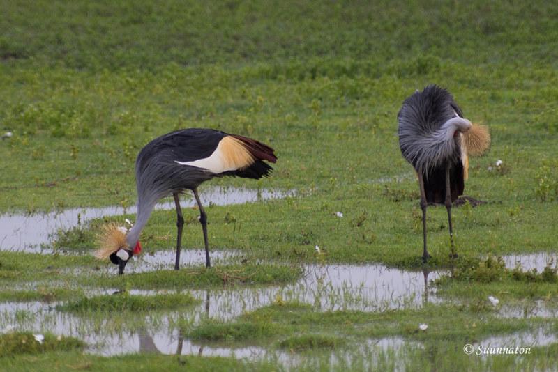 Ngorongoro, Tansania (2)
