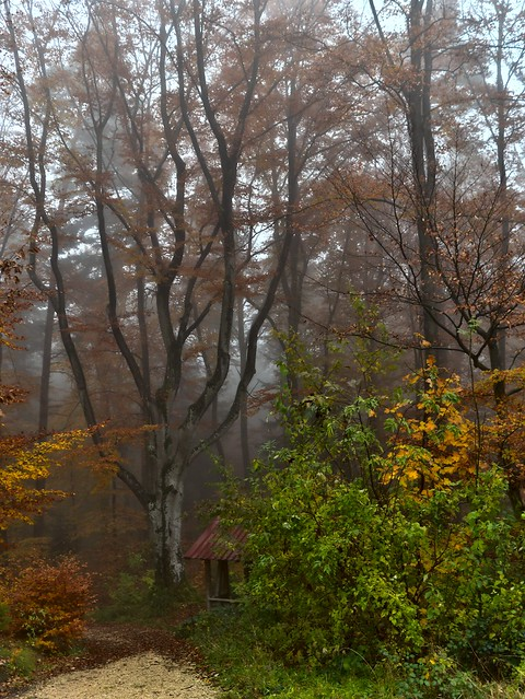 Misty Day in Forrest
