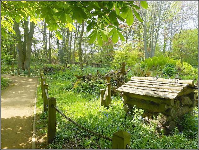 Lovely Woodland Walk ..