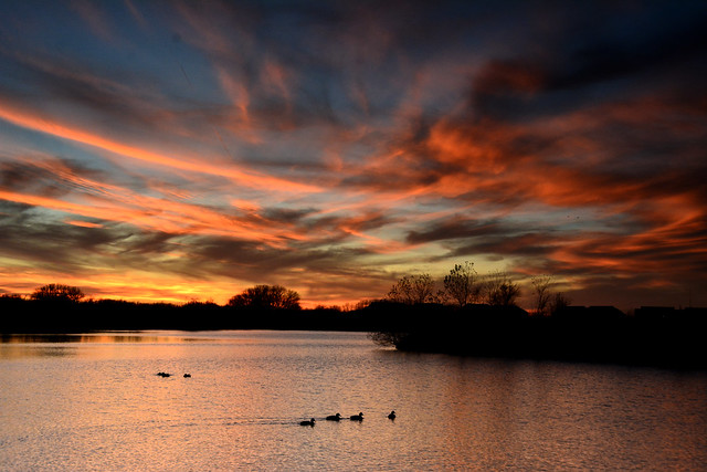 Streaky Sunset with Ducks