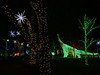 Trees at River of Lights, and dinosaur too! by johngpt