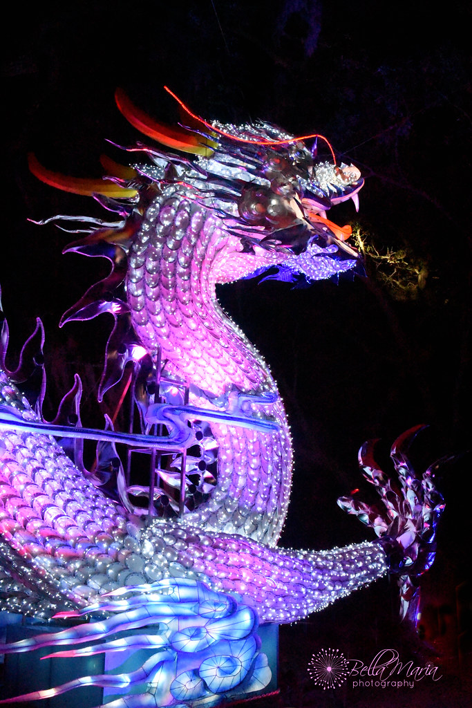 Porcelain Dragon-Magnolia Gardens