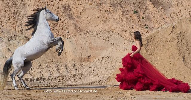 Fotografen-Tag mit Pferden und Reiterinnen in der Nähe von Worms, 2019.