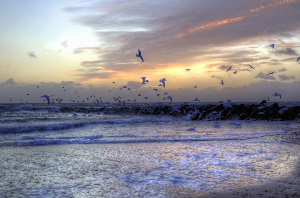 Seagull summit