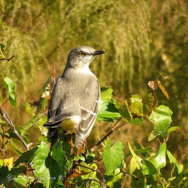Florida's State Bird