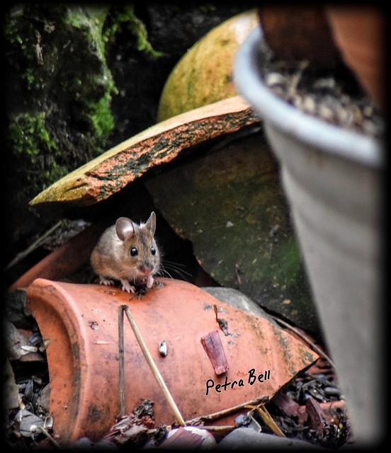 Little mouse 🐁🐀🐁