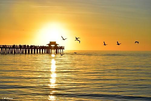 sunset naplespier naplesbeach d5500 pelicans