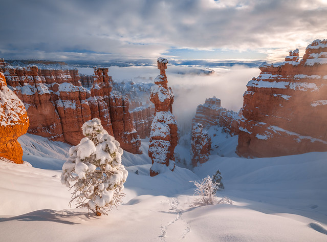 Snowy Hoodoos Clearing Winter Storm! Bryce Canyon National Park Winter Snow Fuji GFX100 Fine Art Landscape Nature Photography! Bryce Canyon NP Utah Winter Scenery! McGucken dx4/dt=ic Medium Format!  Fujifilm Fujinon GF 23mm F/4 R Lm Wr Lens Wide Angle!