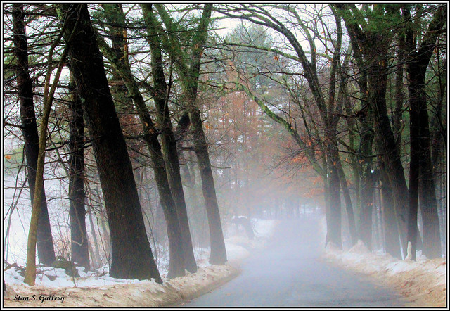 December - Country road as the fog rolls in