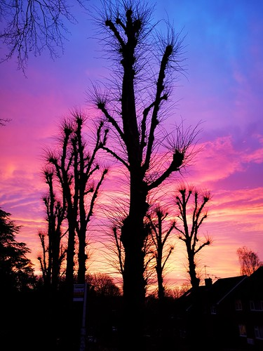 welwyn hertfordshire sunrise colours nature trees silhouette winter