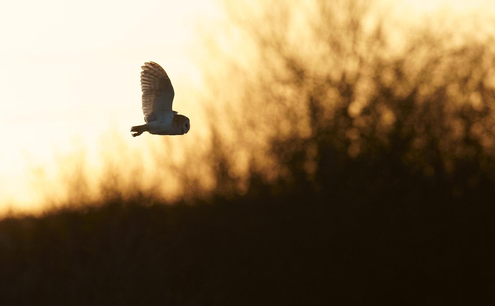 Barn Owl - interesting and evocative lighting