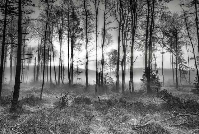 foggy morning in the woods(B\W)