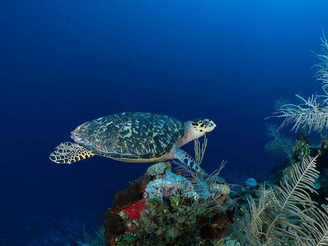 55_PC010040 aquatic turtle