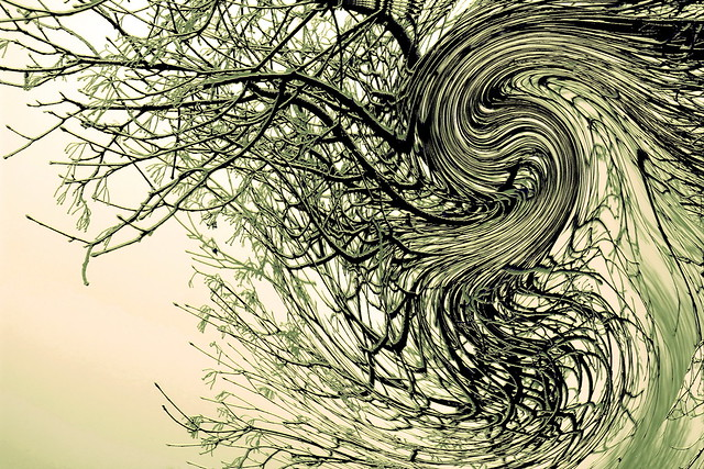 Branch / Faág